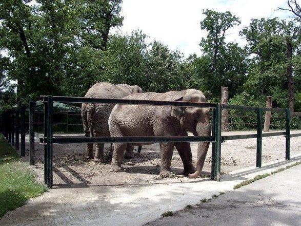 حديقة حيوانات زغرب