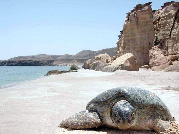 السياحة في سلطنة عمان