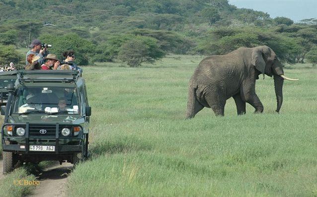 تكلفة السفر الى تنزانيا - السياحة في تنزانيا محمية سيلوس