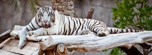 حديقة حيوانات العين بأبو ظبي