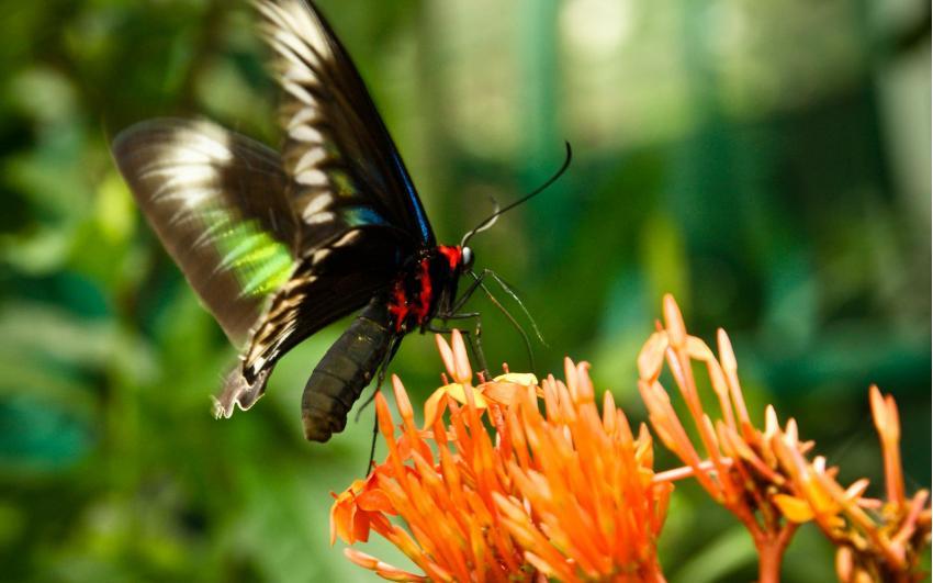 حديقة القراشات بكاميرون هايلاند ماليزيا
