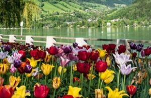 منتزه إليزابيث في زيلامسي النمسا