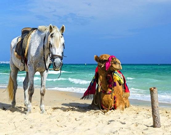 ركوب الحصان والجمل في شاطئ الحمامات