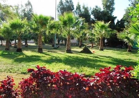 مساحات التنزه في حديقة الملك فيصل في الطائف