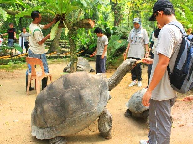 سلاحف حديقة حيوانات نيجارا الوطنية في كوالالمبور