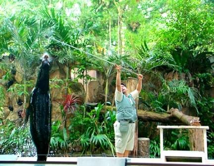 عروض حديقة حيوانات نيجارا الوطنية في كوالالمبور