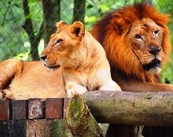 حديقة حيوانات نيجارا الوطنية في كوالالمبور
