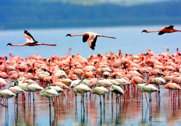 السياحة في تنزانيا بحيرة منيارة