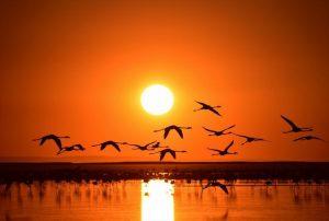 جنة الطيور في مدينة ازمير احدى اجمل اماكن السياحه في ازمير تركيا