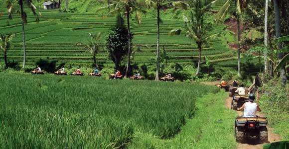 مزارع الارز بالي