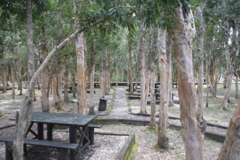 متنزه خوانق النهر الأسود - موريشيوس