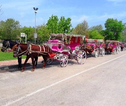 عربات الخيل في حديقة الشرق في سامسون