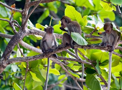 المنطقة المحيطة بشاطئ القرد في كرابي