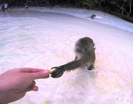 جولة في شاطئ القرد في كرابي