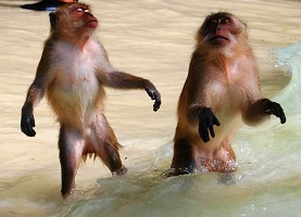 شاطئ القرد في كرابي