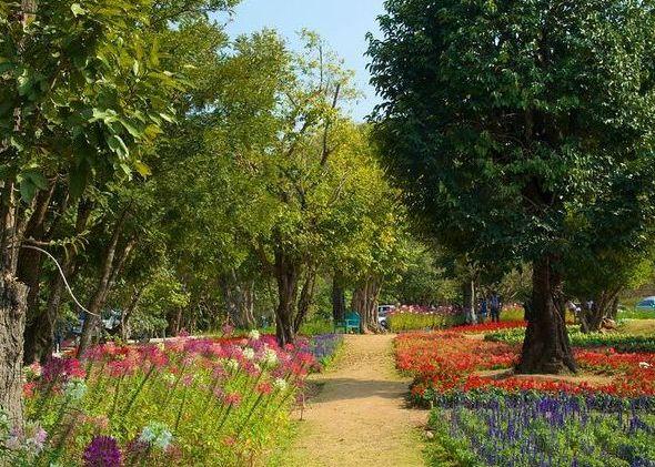 جولة في أفضل 7 أنشطة في حديقة الملكة سيريكيت النباتية في شنغماي تايلاند