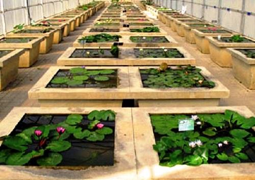 بيت الزهور المائية الزجاجي في أفضل 7 أنشطة في حديقة الملكة سيريكيت النباتية في شنغماي تايلاند