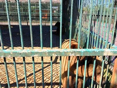 حديقة حيوانات سامسون التركية
