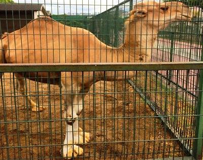 حديقة الحيوانات من اجمل اماكن السياحة في سامسون تركيا