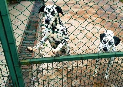 حديقة الحيوانات في مدينة سامسون التركية