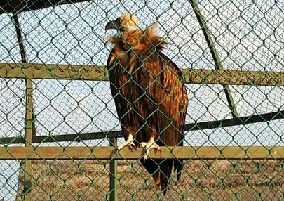 حديقة الحيوانات في سامسون تركيا