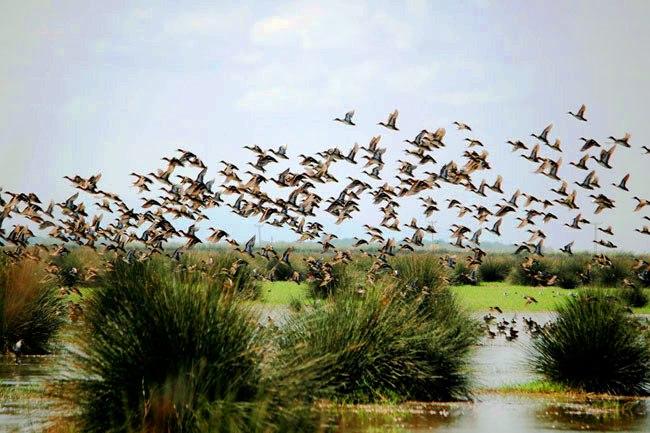طيور جنة الطيور في سامسون تركيا
