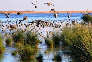 تعد حديقة جنة الطيور في سامسون اجمل اماكن السياحة في تركيا