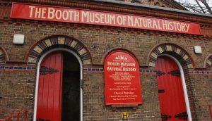 متحف بوث للتاريخ الطبيعي