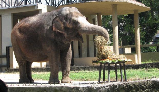 حديقة حيوانات في ريو دي جانيرو من افضل الحدائق في ريو دي جانيرو