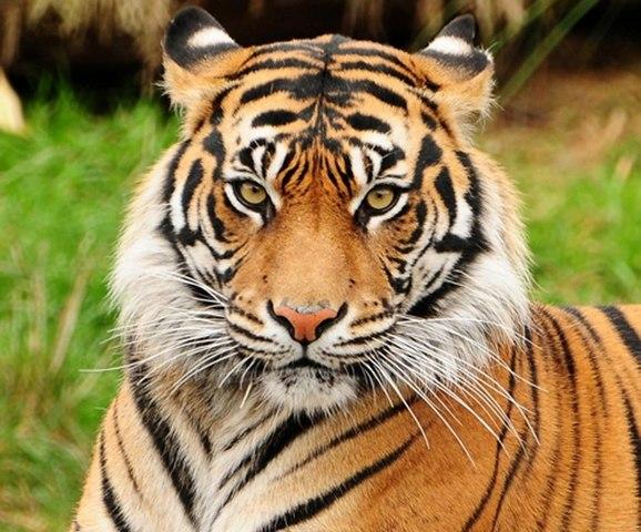 حديقة الحيوان في ريو دي جانيرو من افضل اماكن السياحة في ريو دي جانيرو