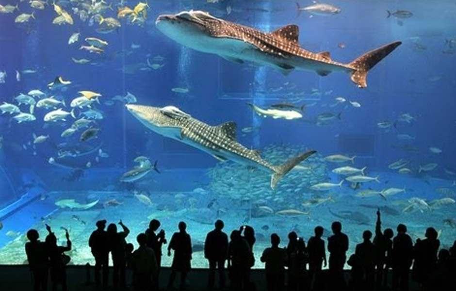 دبي مول من اهم الاماكن السياحية في دبي الامارات