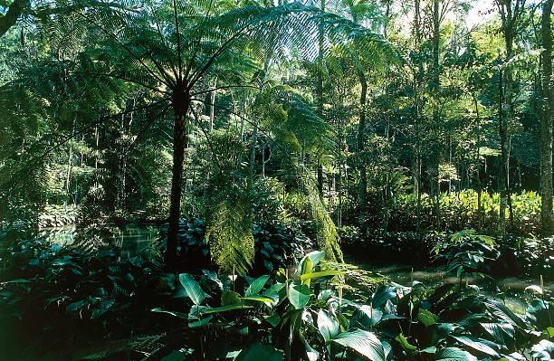 حديقة تيجوكا الوطنية ريو دي جانيرو من افضل الاماكن السياحية في ريو دي جانيرو