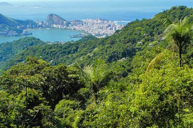 حديقةتيجوكا الوطنية في مدينة ريو دي جانيرو من افضل حدائق ريو دي جانيرو