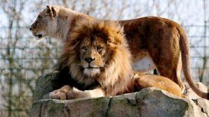 تعرف في المقال على افضل الانشطة السياحية في حديقة حيوانات بلاكبول ، بالإضافة الى افضل فنادق بلاكبول القريبة من الحديقة