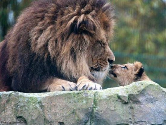 حديقة حيوانات بلاكبول من افضل حدائق مدينة بلاكبول السياحية