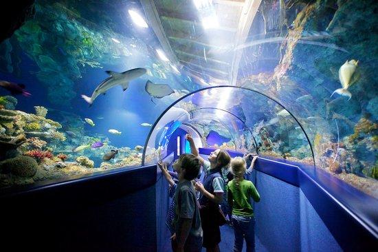 حديقة حيوانات بريستول