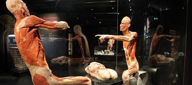متحف عالم جسم الانسان امستردام من افضل الاماكن السياحية في امستردام هولندا
