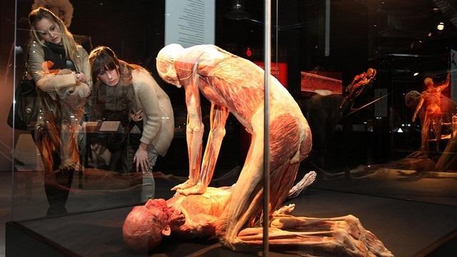 متحف عالم جسم الانسان من افضل المتاحف في امستردام