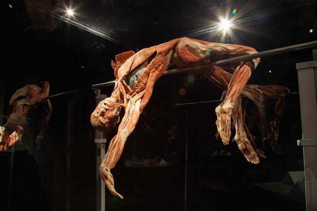متحف عالم جسم الانسان في امستردام من افضل متاحف امستردام