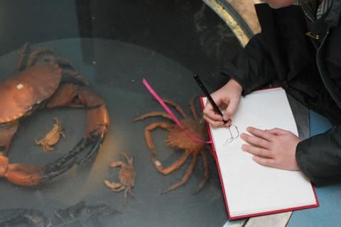 متحف بوث للتاريخ الطبيعي - برايتون