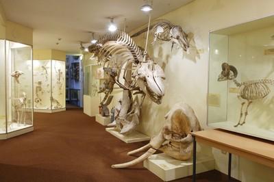 متحف بوث للتاريخ الطبيعي برايتون