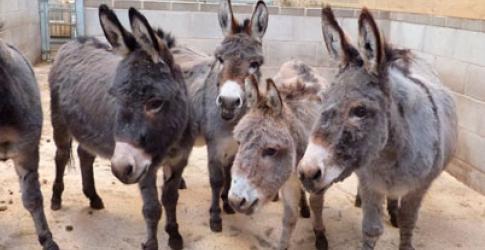 حديقة حيوانات بلاكبول من افضل اماكن السياحة في انجلترا