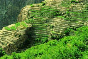 الجبل الاخضر سلطنة عمان من افضل اماكن السياحة في عمان