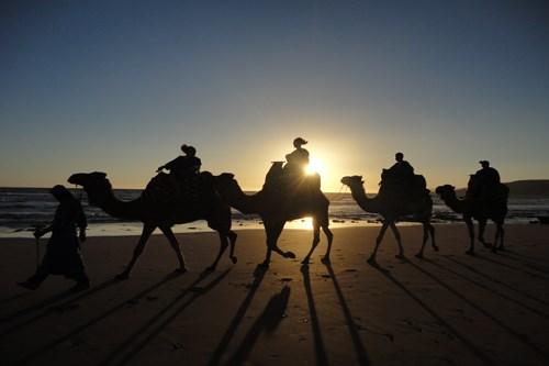 ركوب الخيل والجمال في اغادير من اهم الانشطة السياحية في اغادير المغربية