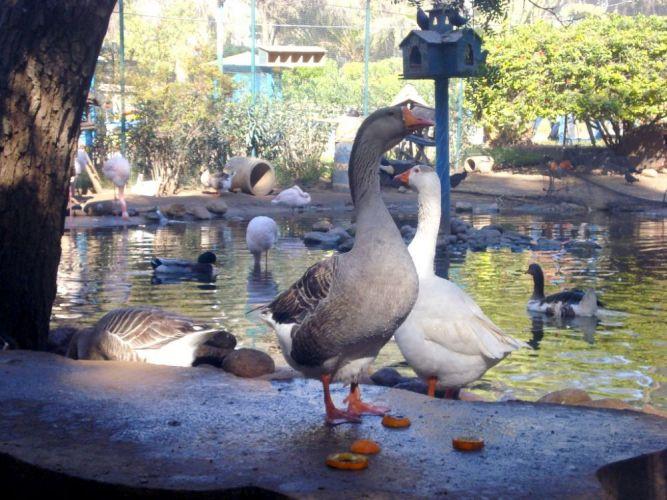 حديقة وادي الطيور من اهم الاماكن السياحية في المغرب اغادير