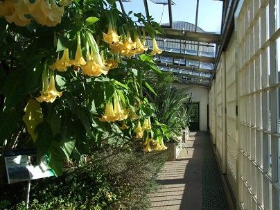 الحدائق النباتية في شيفيلد