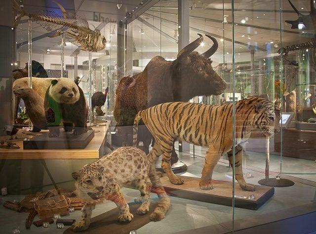 متحف ليدز من افضل متاحف ليدز