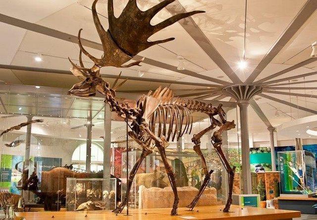 متحف مدينة ليدز من افضل المتاحف في ليدز