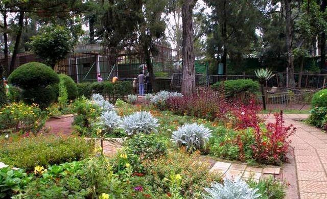 السياحة في اثيوبيا - حديقة الاسود في اديس ابابا