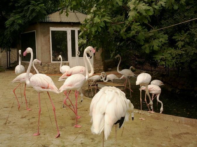 حديقة حيوانات باكو من افضل الاماكن السياحية في مدينة باكو الاذربيجانية